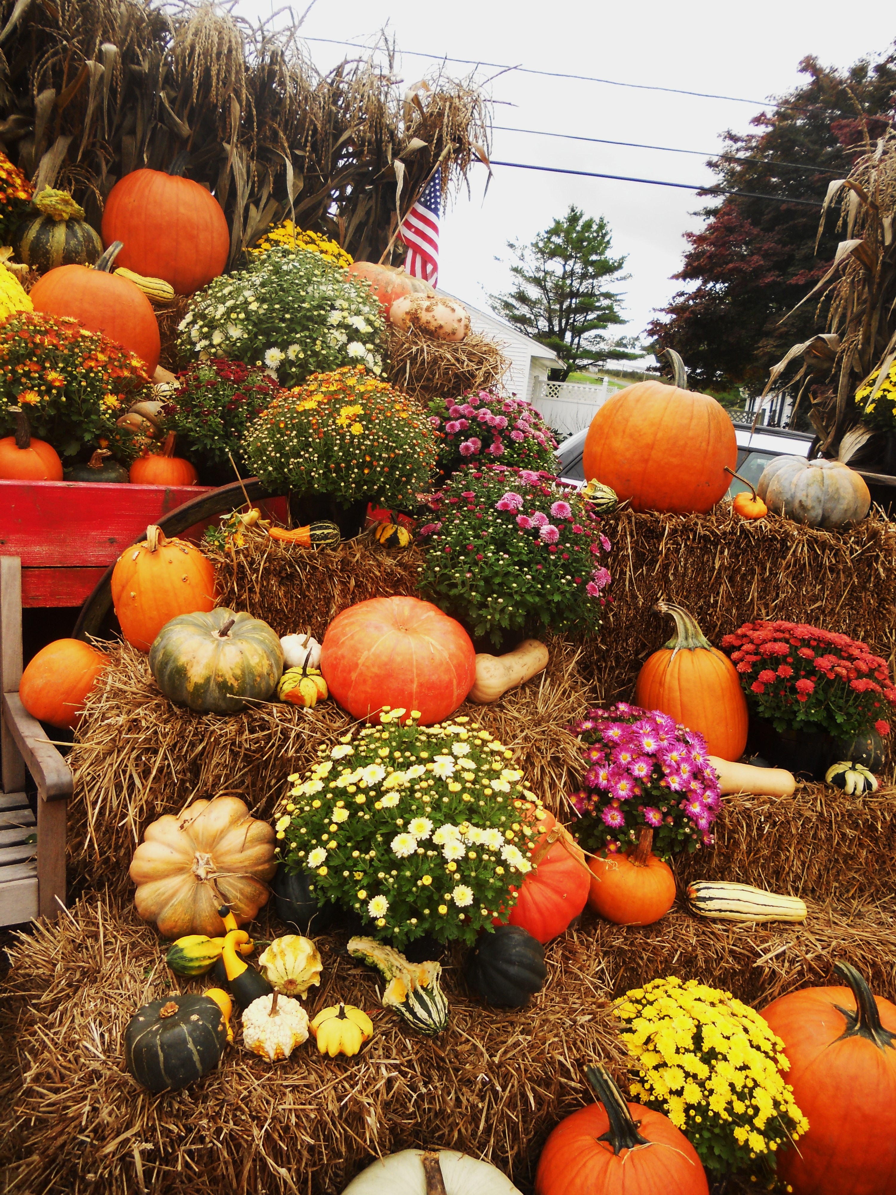 Thanksgiving yard decorations - Fall In New England Pumpkins Apples Mums Amp More