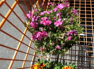 city garden the process 3