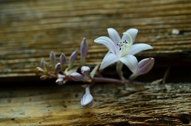 blossom-834630_1920