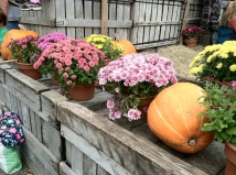 Fall for Blog posts 006