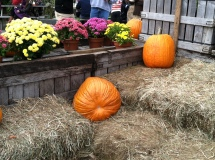 Fall for Blog posts 009