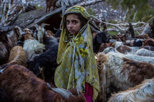 Watching mountain goats