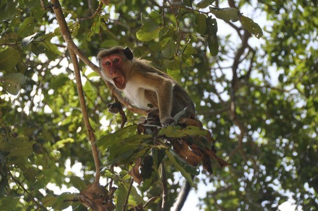 monkey-20182_1920