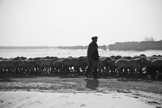 shepherd-60657_1280